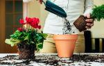 Бабушкины методы: зачем в горшок с цветами кладут кусочек свежей рыбы