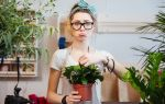 5 комнатных растений, от которых может разболеться голова
