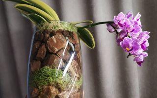 Почему орхидее не нужен прозрачный горшок: опровержение устоявшегося стереотипа