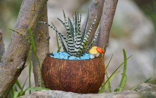 Как сделать горшки из кокоса — растения в них чувствуют себя прекрасно