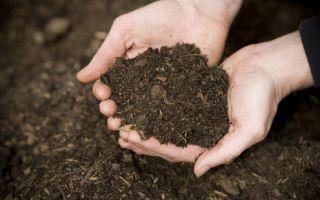 6 способов определить кислотность почвы без лабораторных анализов и специальных приборов