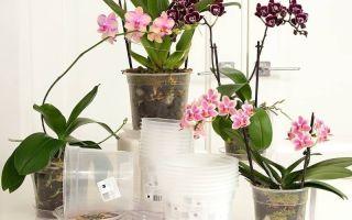 Что нужно знать о горшке для орхидеи перед тем, как обзавестись капризной красоткой