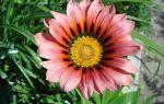 8 растений, которые выживут на открытом балконе
