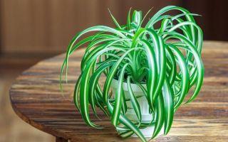 5 неприхотливых растений для кухни