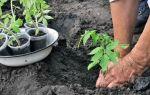 Что класть в лунку при посадке помидор, чтобы получить высокий урожай томатов