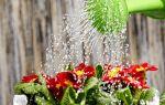 6 правил полива домашних растений, чтобы цветы были здоровыми