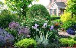 7 видов многолетних и морозостойких цветов для дачи на севере