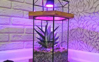 Как быстро спасти комнатное растение, которое погибает из-за нехватки света
