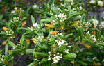 5 комнатных растений с самым приятным и стойким ароматом