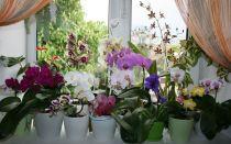 6 вещей, которые не переносит орхидея