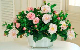 7 комнатных растений, которые любят холод