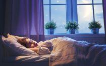 Вместо Морфея: 5 комнатных растений, с которыми вы будете спать как младенец