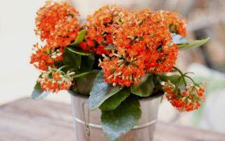 13 комнатных растений, которые выживут даже без постоянного ухода