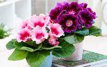 Гордость хозяйки: 10 самых красивоцветущих комнатных цветов