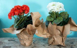 6 правил, которые надо соблюдать, если вы решили подарить цветок в горшке