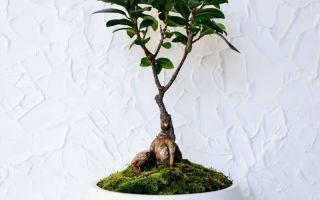 12 растений, которые продают в IKEA: стоит ли их там покупать