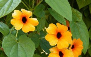 11 растений для южного балкона, которые выживут под палящим солнцем