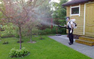 Когда и чем опрыскивают ягодные кустарники опытные садоводы