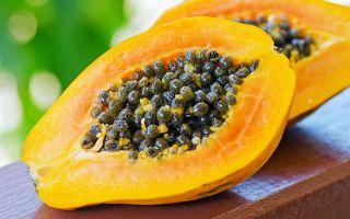 Папайя: описание и полезные свойства тропического фрукта