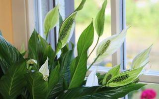 Неожиданное поведение домашних растений: что оно означает, по приметам