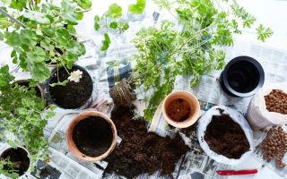 Как подготовить горшок к посадке комнатного растения, чтобы оно прижилось и развивалось