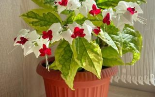 Подходящие места в квартире для 7 душистых растений