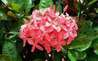 5 эффектных комнатных растений, которые цветут все лето