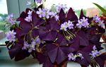 5 комнатных растений, которые дарят незамужним