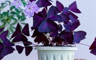4 комнатных растения с листьями и цветами, напоминающими разных животных
