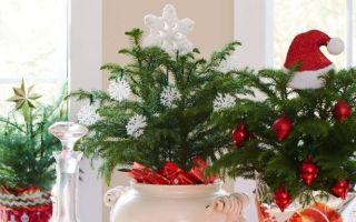 Подходящий подарок на Новый год для цветовода: 5 отличных идей