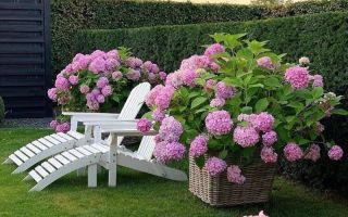 10 растений для контейнерного озеленения: минимум места, максимум красоты