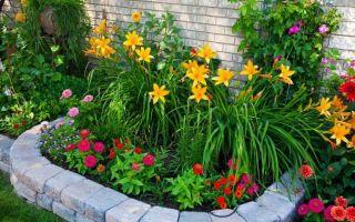 Топ — 10 многолетних цветов для вашего сада