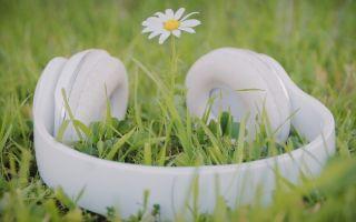 Как разные звуки и слова влияют на состояние растений