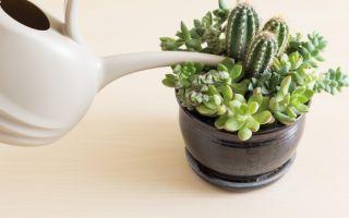 7 ошибок в уходе за кактусами, которые могут их погубить