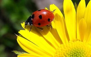 От каких жуков на даче не нужно избавляться: они принесут вам только пользу