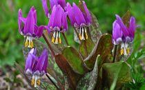 13 тенелюбивых растений, которые будут цвести там, где даже трава плохо растет