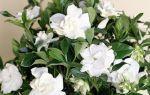 5 домашних растений, которые любят восточный подоконник