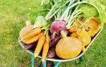 Перешла на органическое земледелие — больше не покупаю навоз и химию