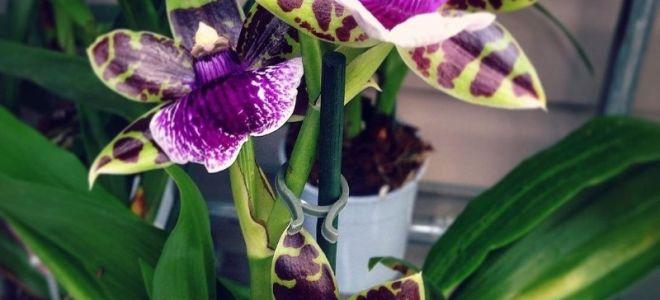 6 видов некапризных орхидей — с ними справятся даже цветоводы-новички