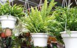 Почему комнатные растения увядают