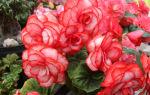 5 комнатный растений, которые цветут круглый год и не требуют сложного ухода