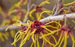 5 растений, которые умеют двигаться, как бы странно это ни звучало