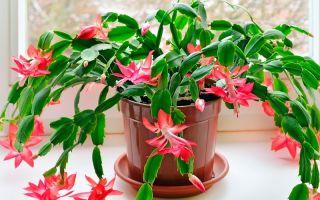 Комнатные растения, с которыми справится даже новичок