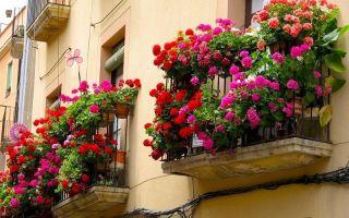 Какие цветы посадить на балконе, чтобы они цвели все лето