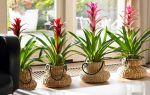 6 тропических растений, которые можно вырастить в обычной квартире