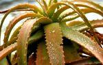 7 признаков того, что вы переливаете растение