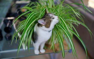 6 комнатных цветов, на которые часто покушаются кошки: безопасны ли для них растения