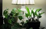 Четыре типа комнатных тенелюбивых и неприхотливых растений