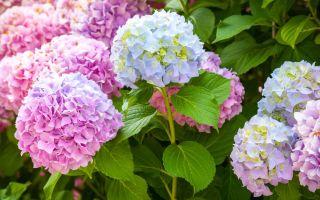 Отцвели уж давно: каким растениям нужно проводить обрезку после цветения