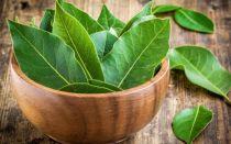 Как легко размножить лавр из веника, чтобы выращивать растение дома и на даче